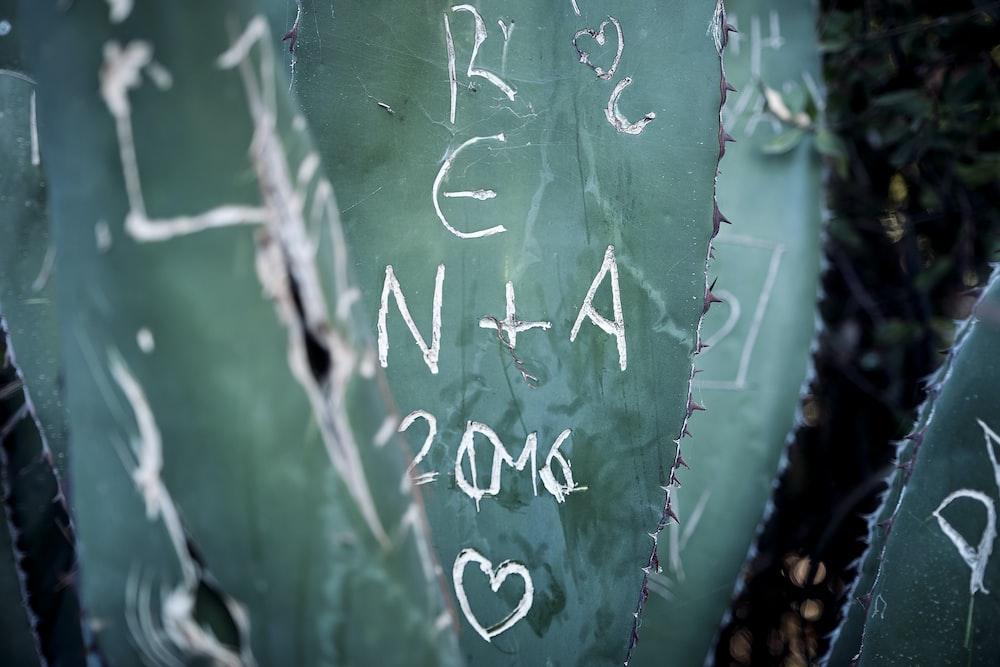 closeup photo of cactus leaves