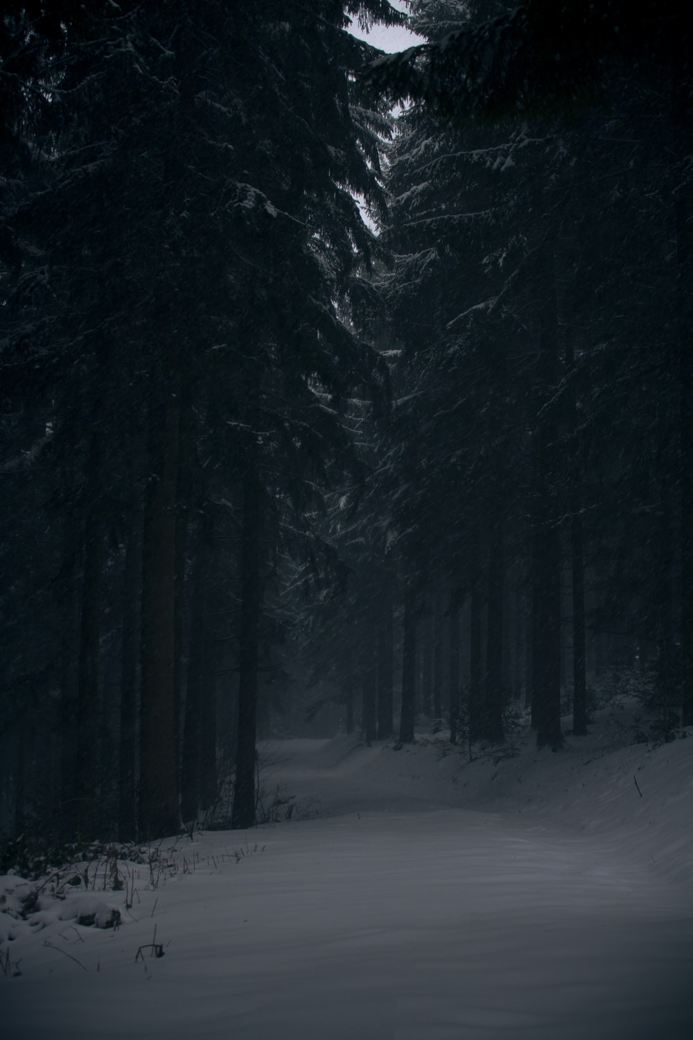 pine trees covered by snow at daytime