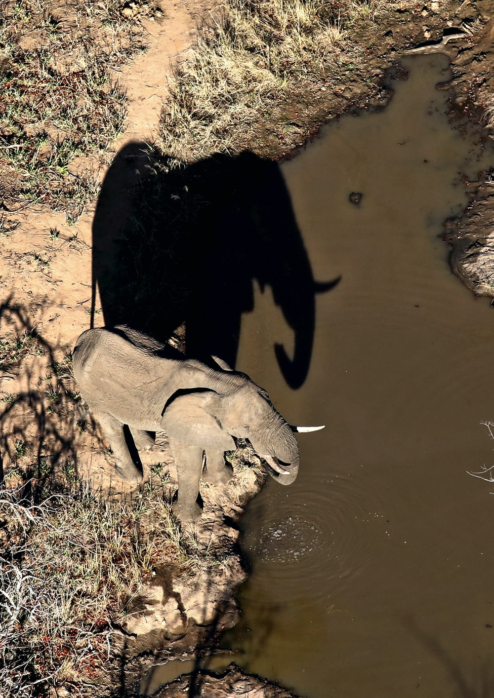 brown elephant near body of water