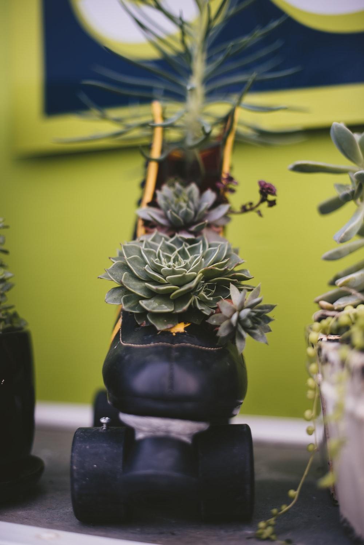 green succulent plant on roller skate