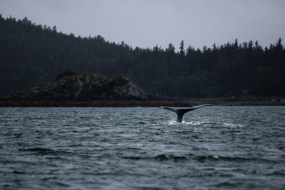 whale tail above body of water