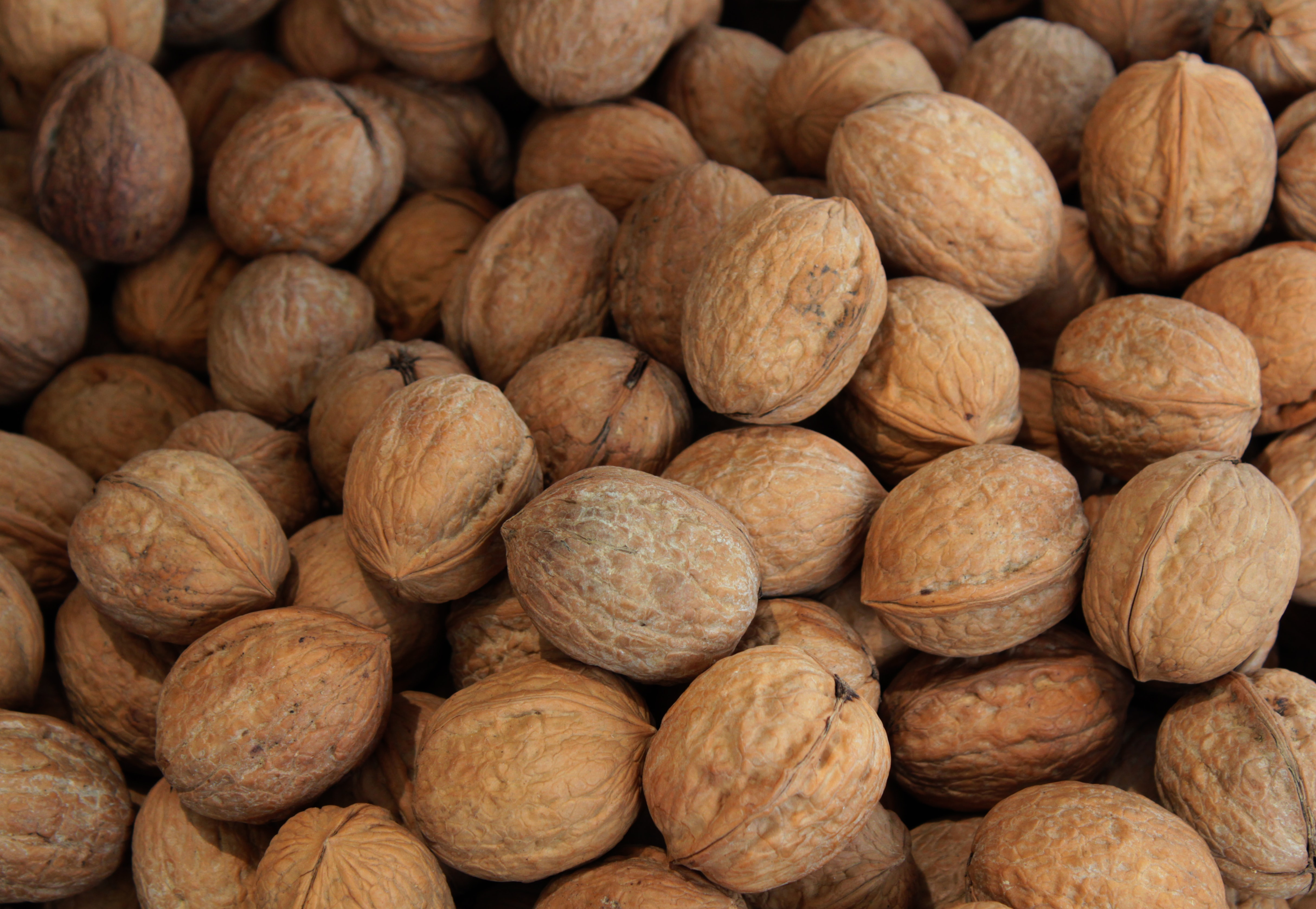 brown nut lot