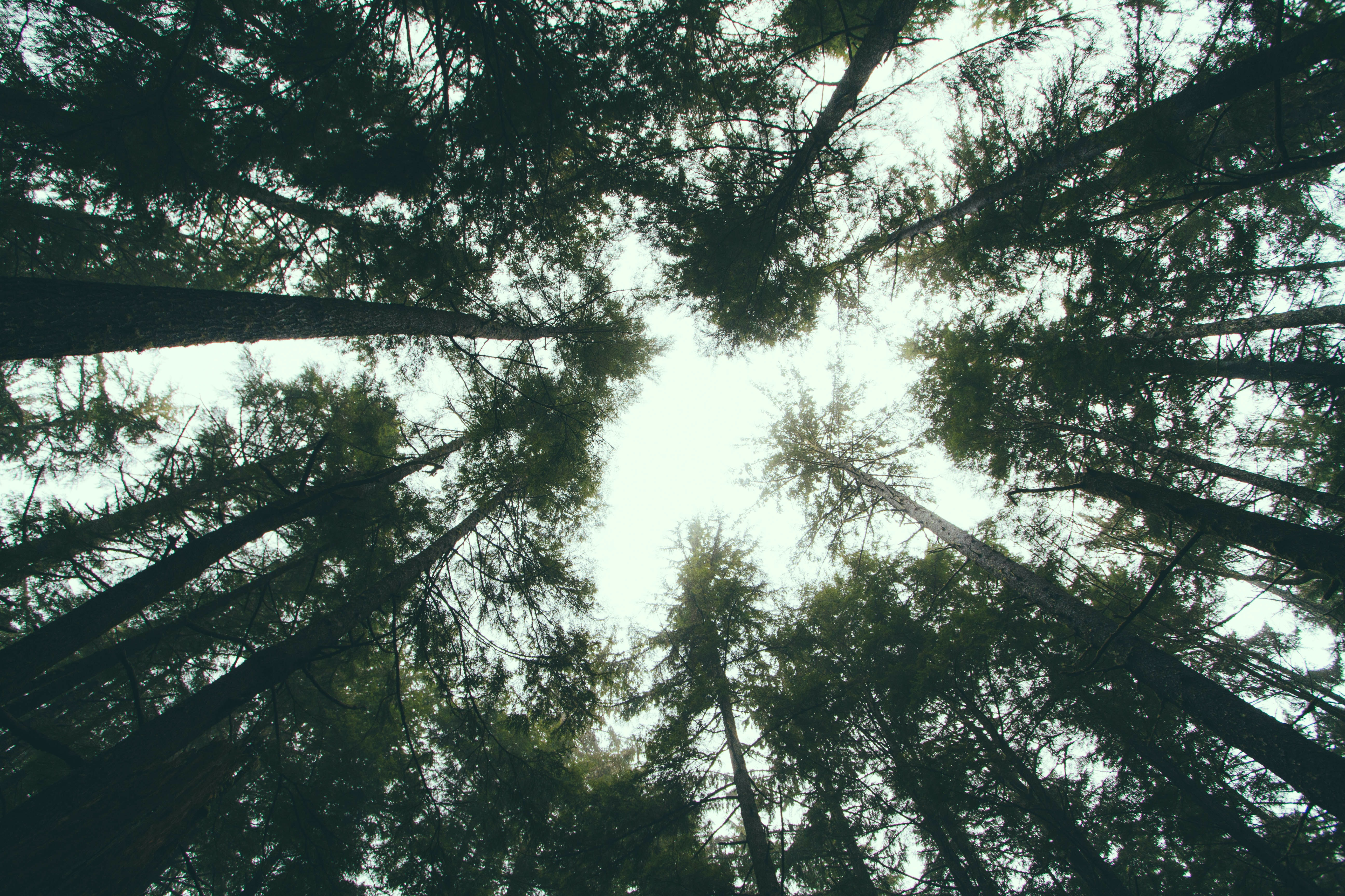 worms eye view photography of green leafed trees