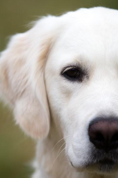 4410. Kutya