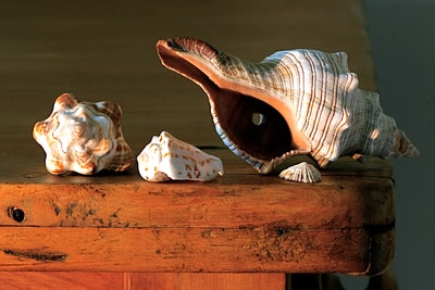 white and brown sea shell on table ornaments teams background