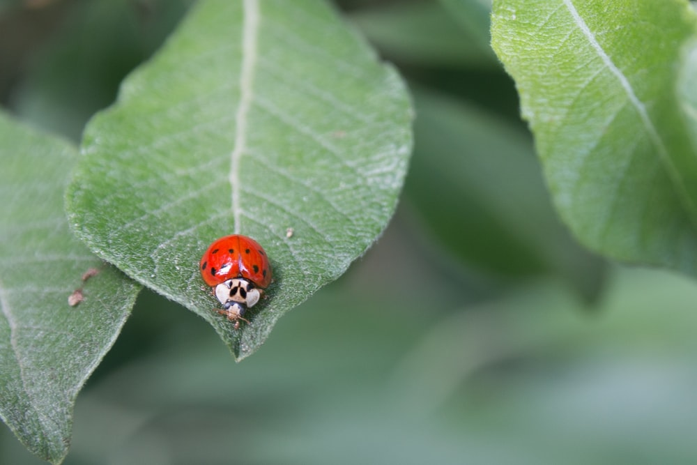 red and white bug on green plant