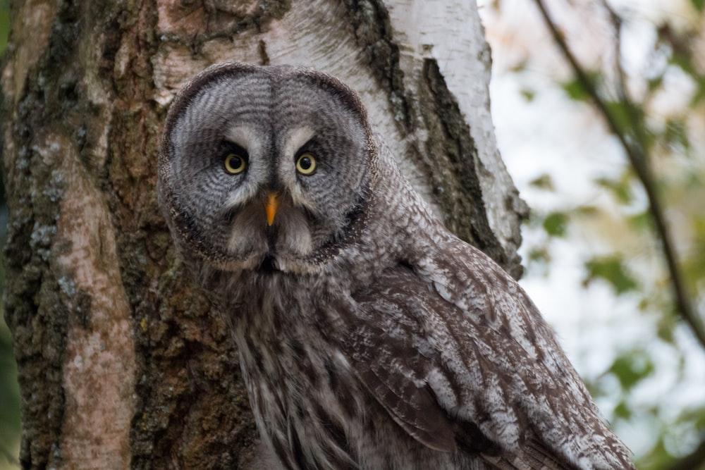 macro photography of gray owl