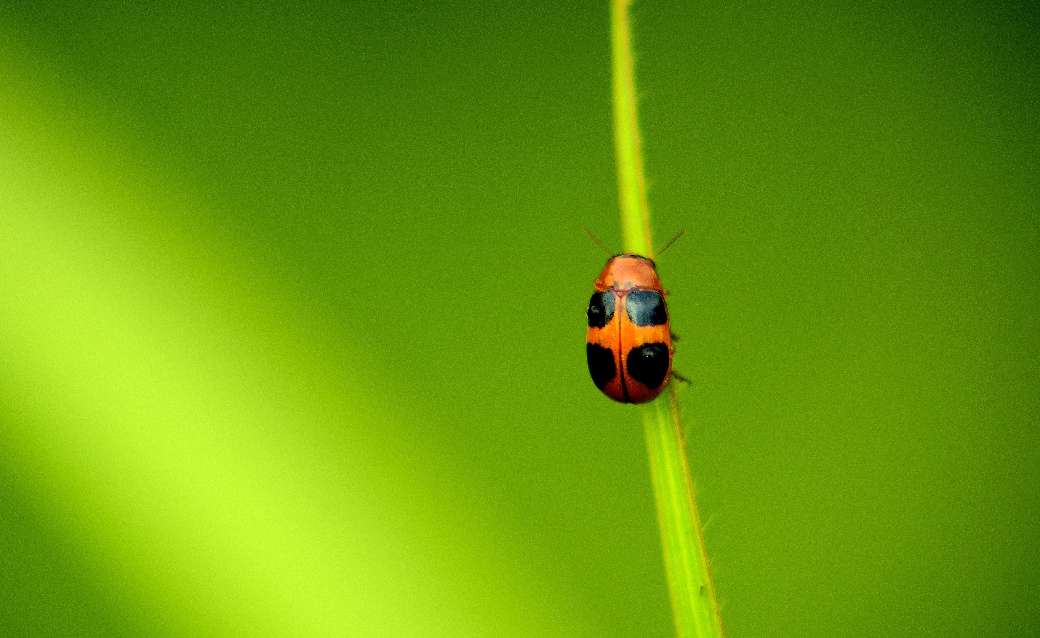selective focus photo of ladybird