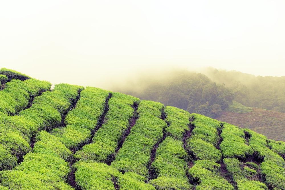 landscape photography of green grass fields