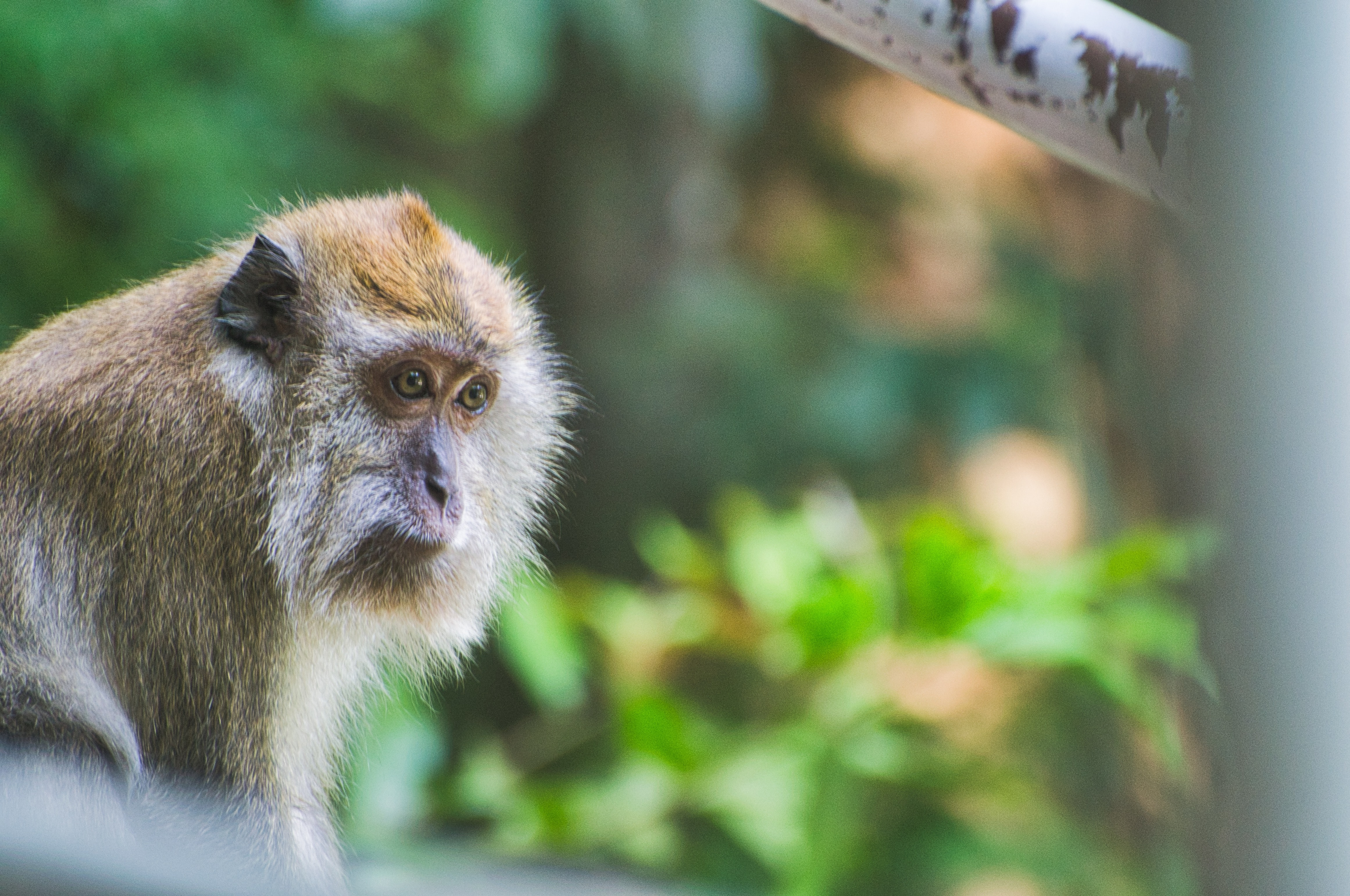 brown monkey in selective focus photography