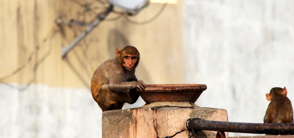 monkey sitting on concrete pillar with basin