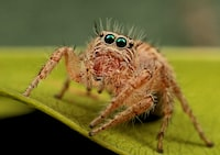 macro photography of brown spider
