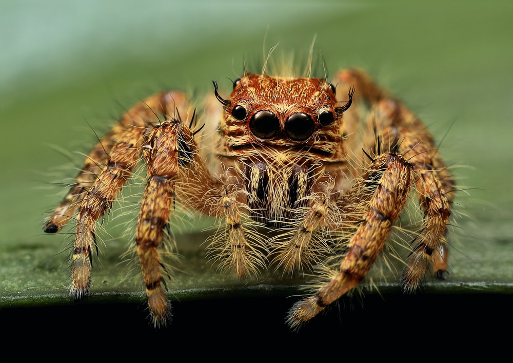 macro photography of spider
