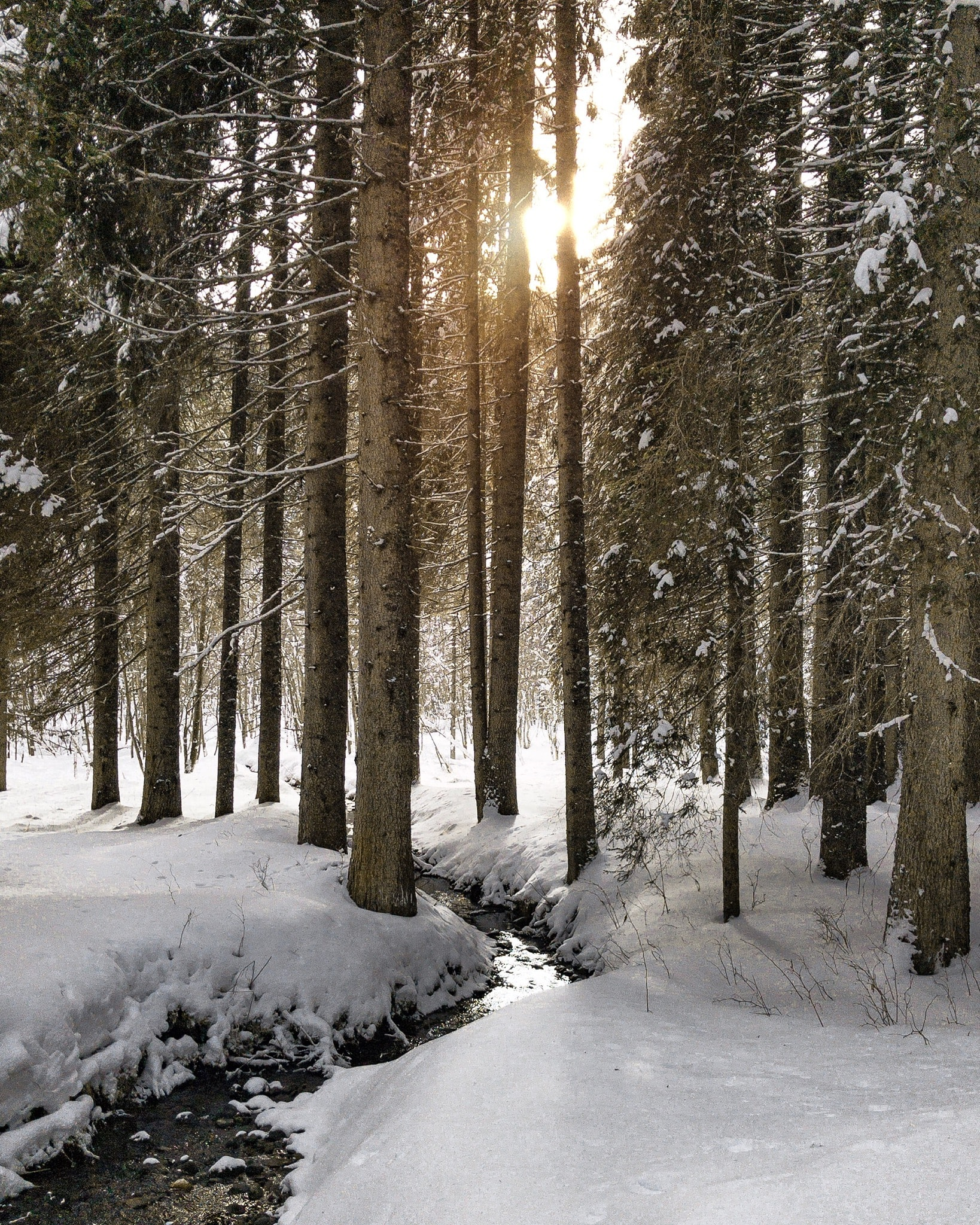 photography of trees in woods