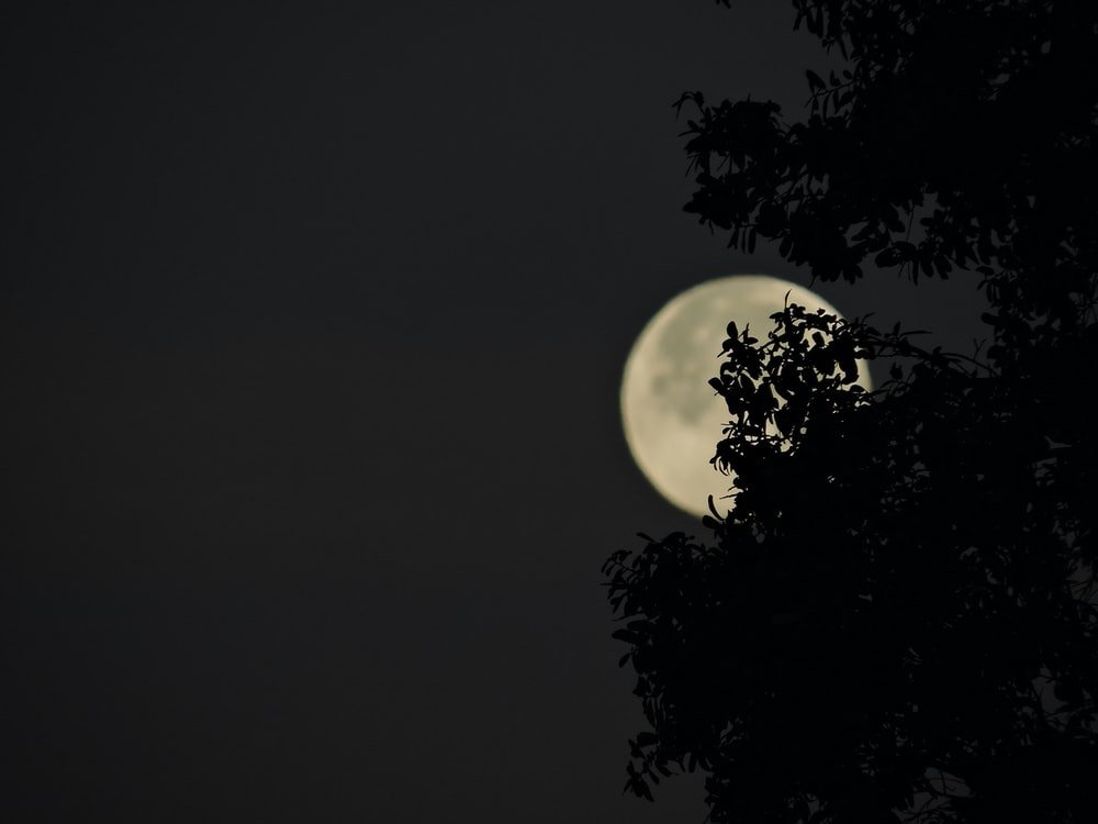 full moon covering tree leaves