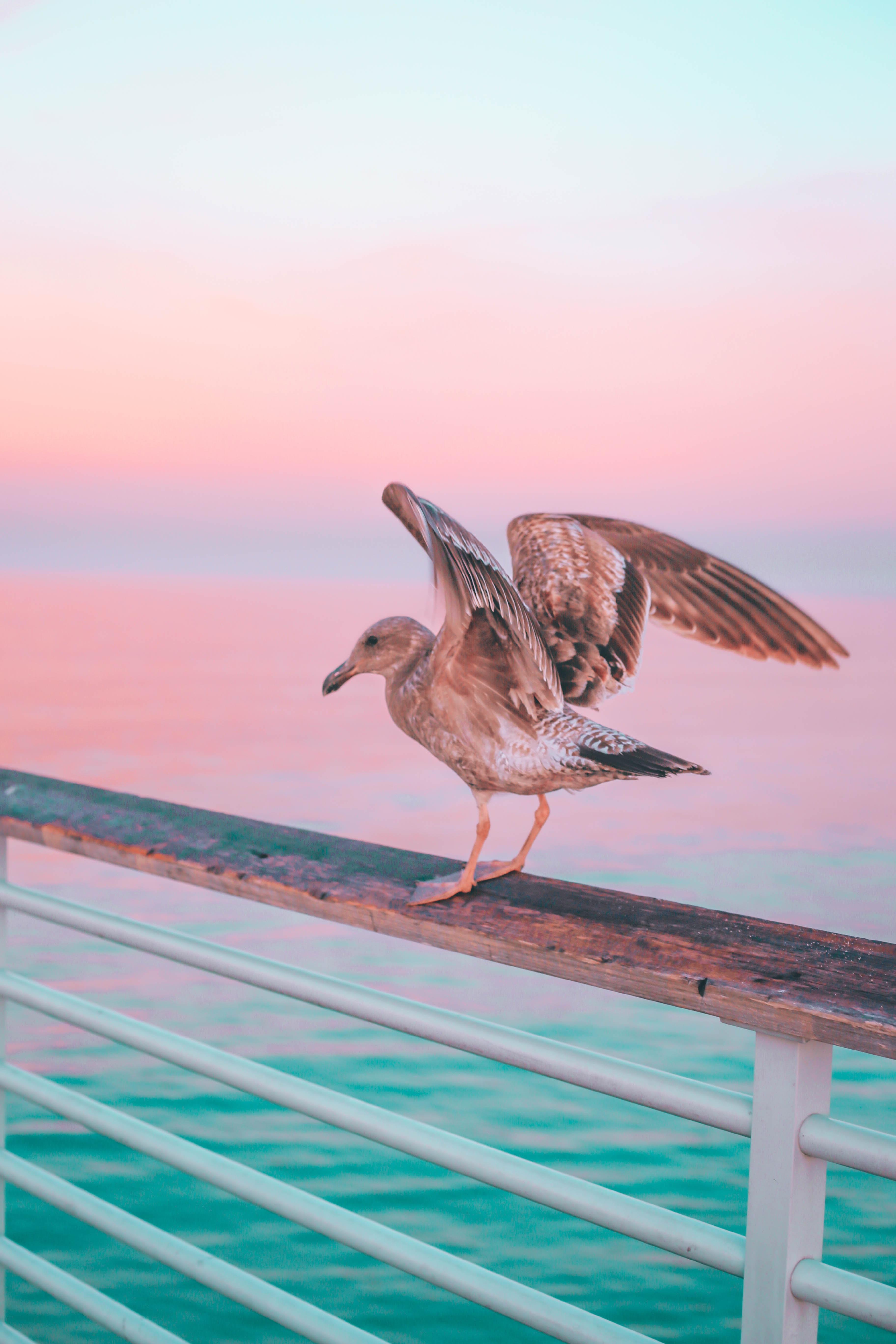 brown bird on brown wooden handrail during daytime