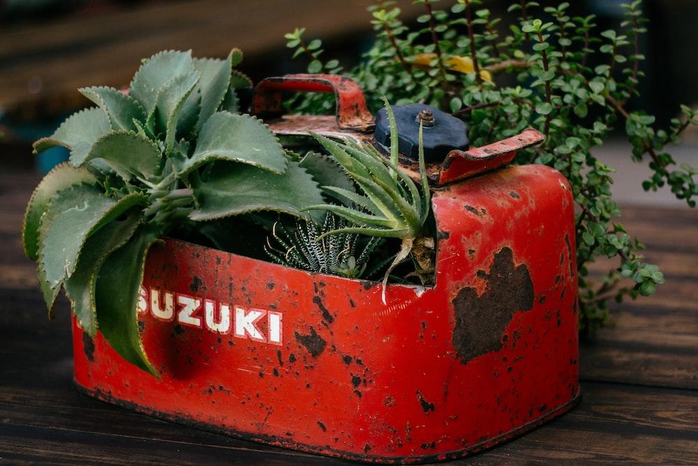 closeup photo of green leafed plant on red Suzuki gasoline tank pot