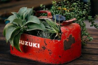 closeup photo of green leafed plant on red suzuki gasoline tank pot suzuki zoom background