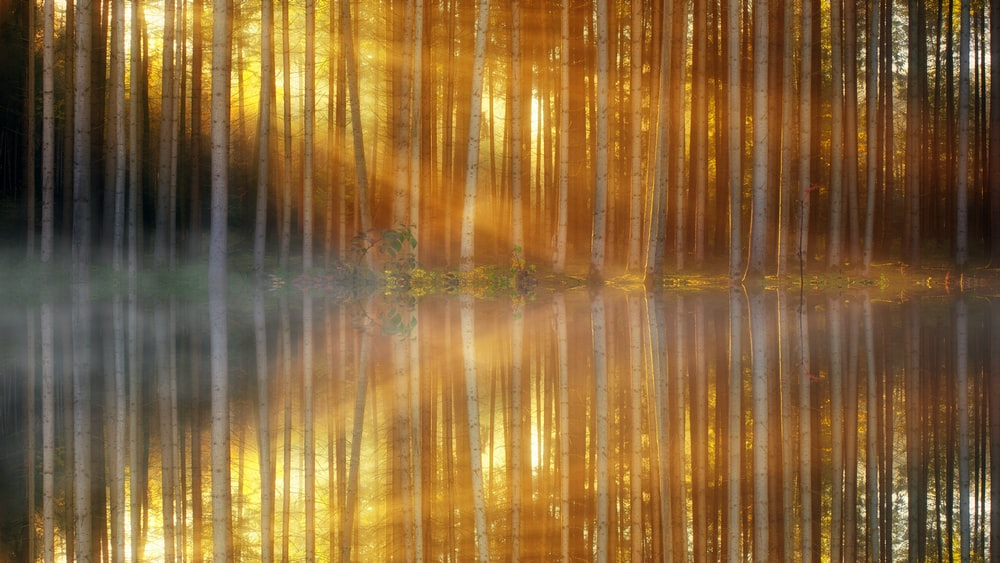 time lapse photography of trees