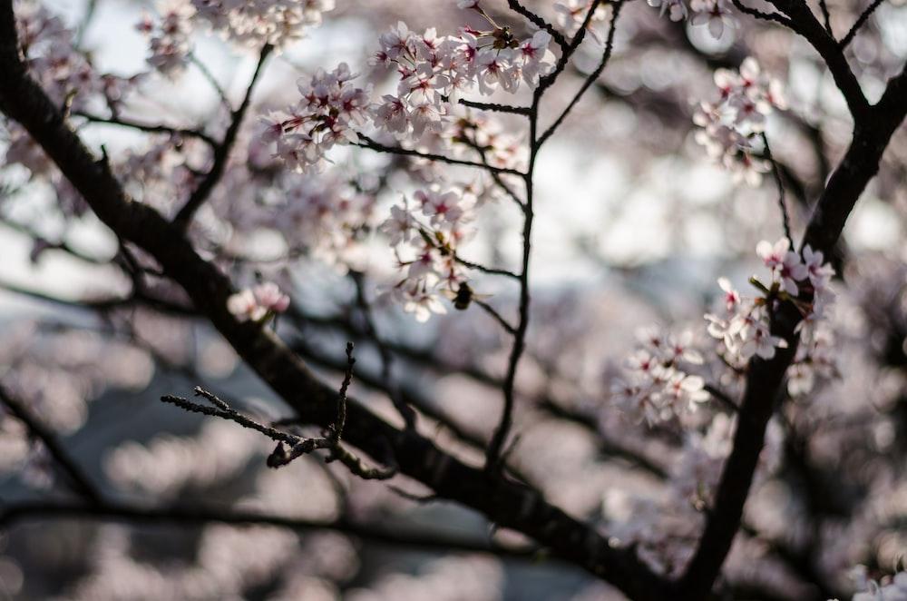 closeup photo of flowering tree
