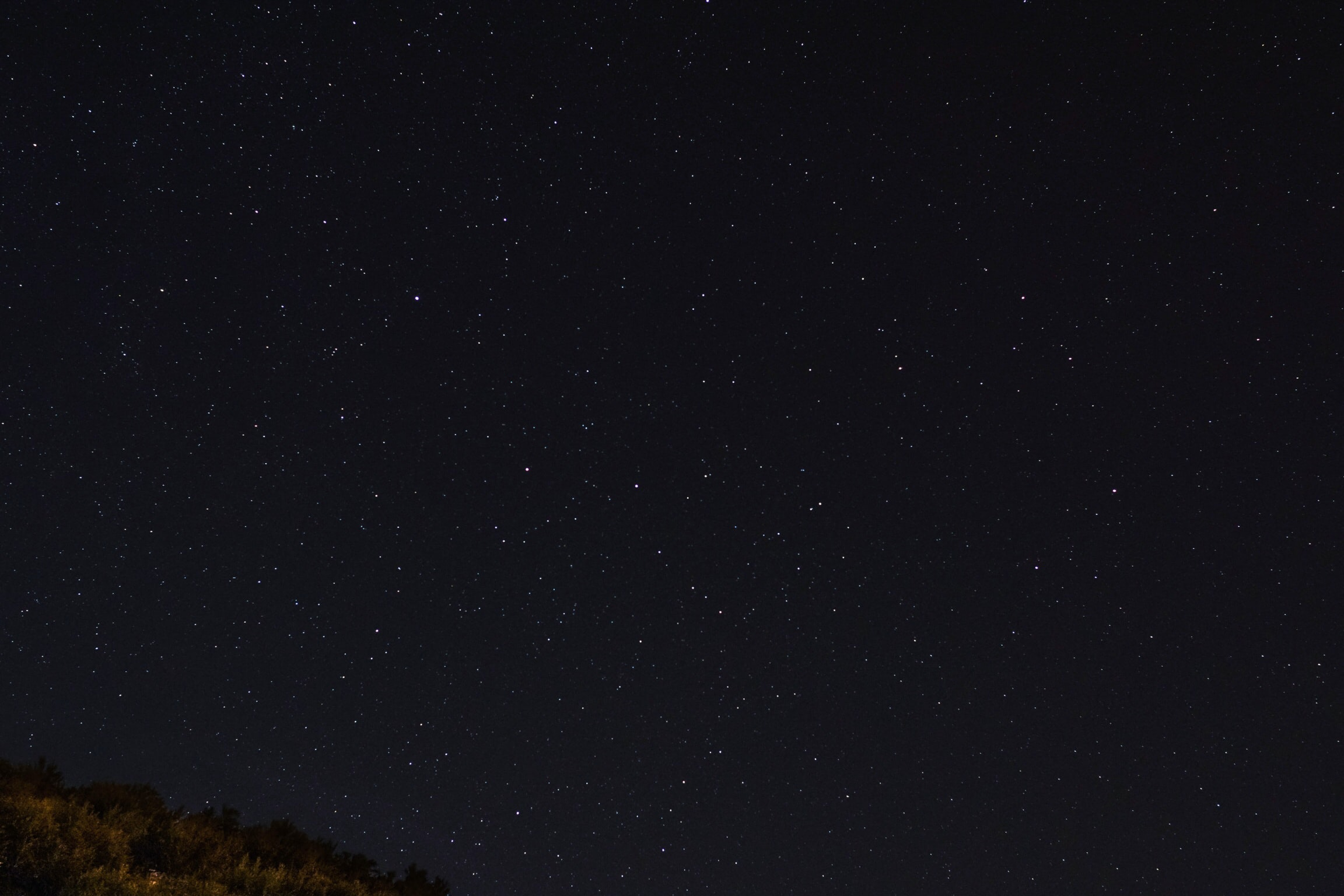 green trees under starry sky