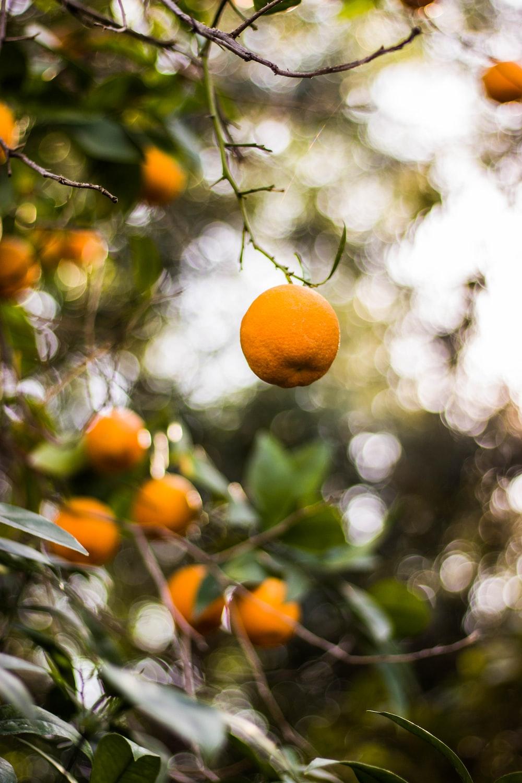 closeup photography of round orange fruit