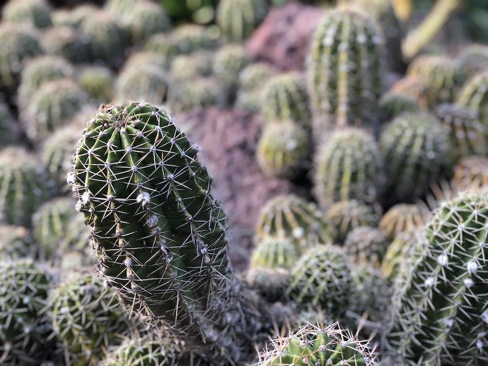 photo of green cactus