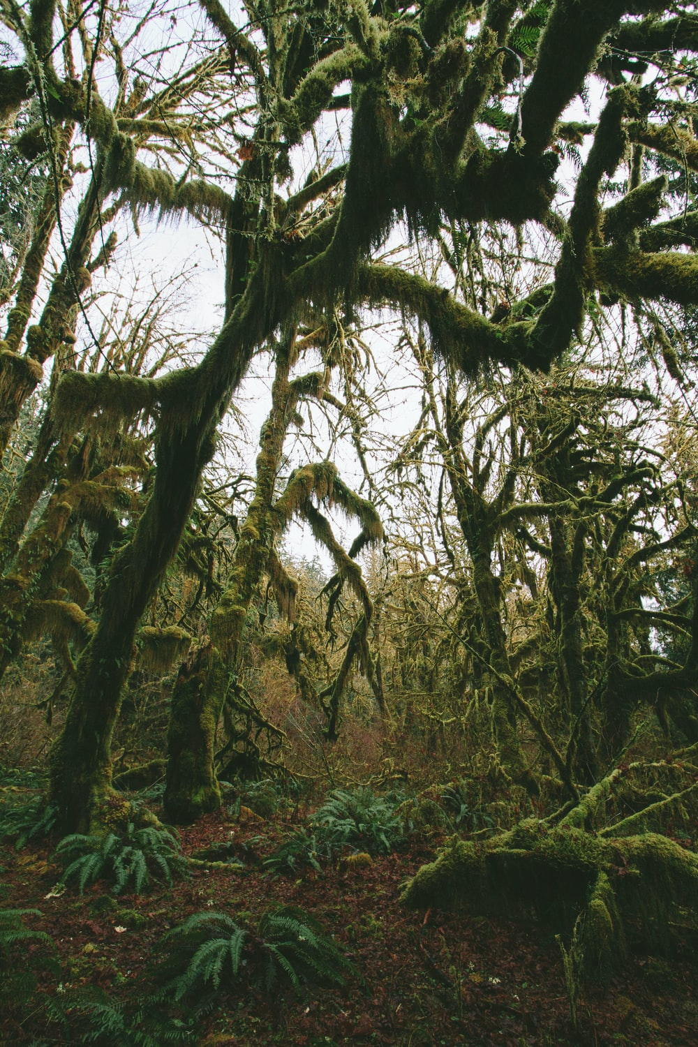 forest with mossy trees during daytime