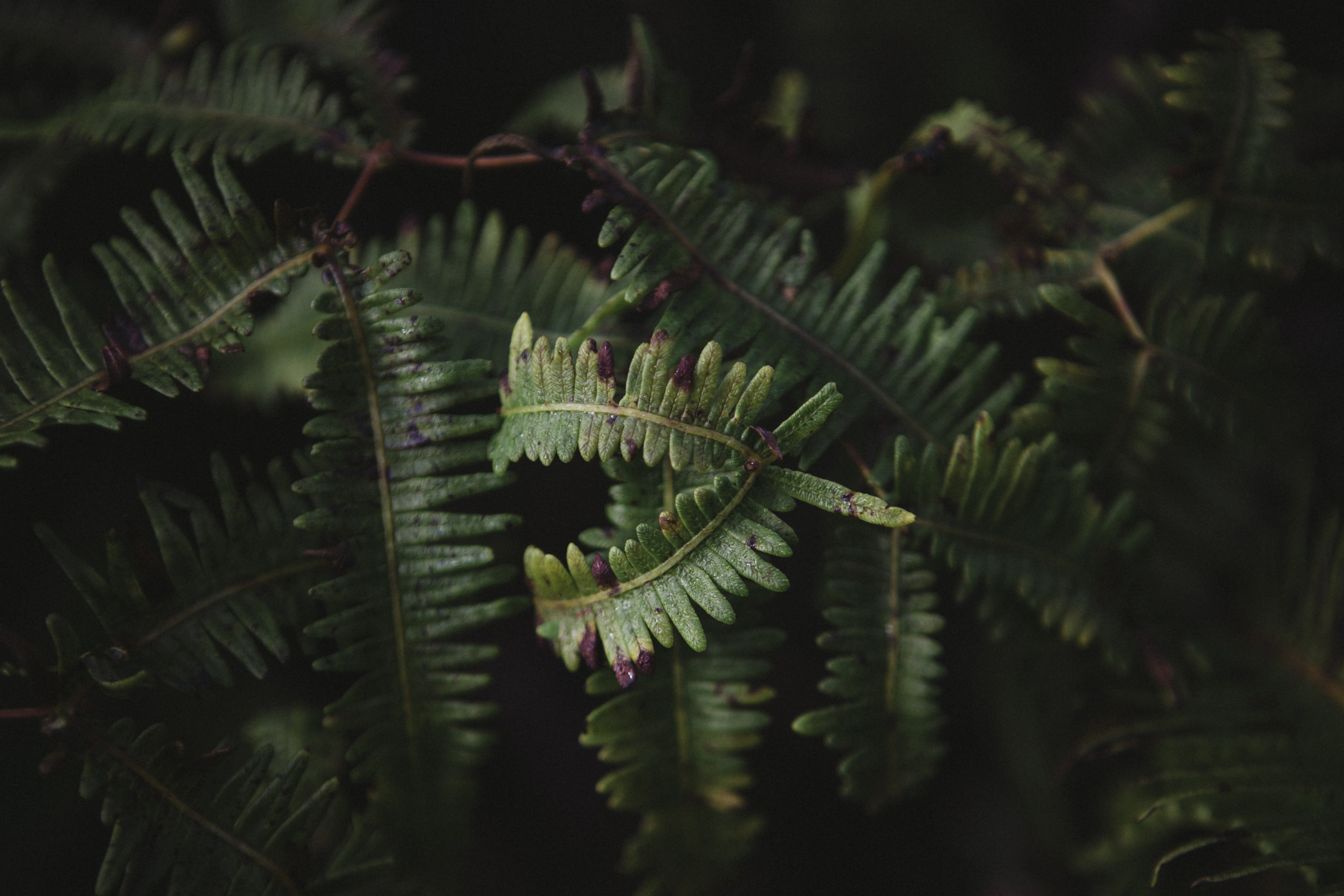selective focus photography of green leaf plants