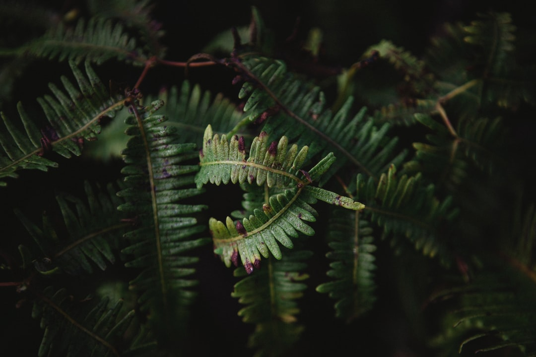 Volcanic Foliage