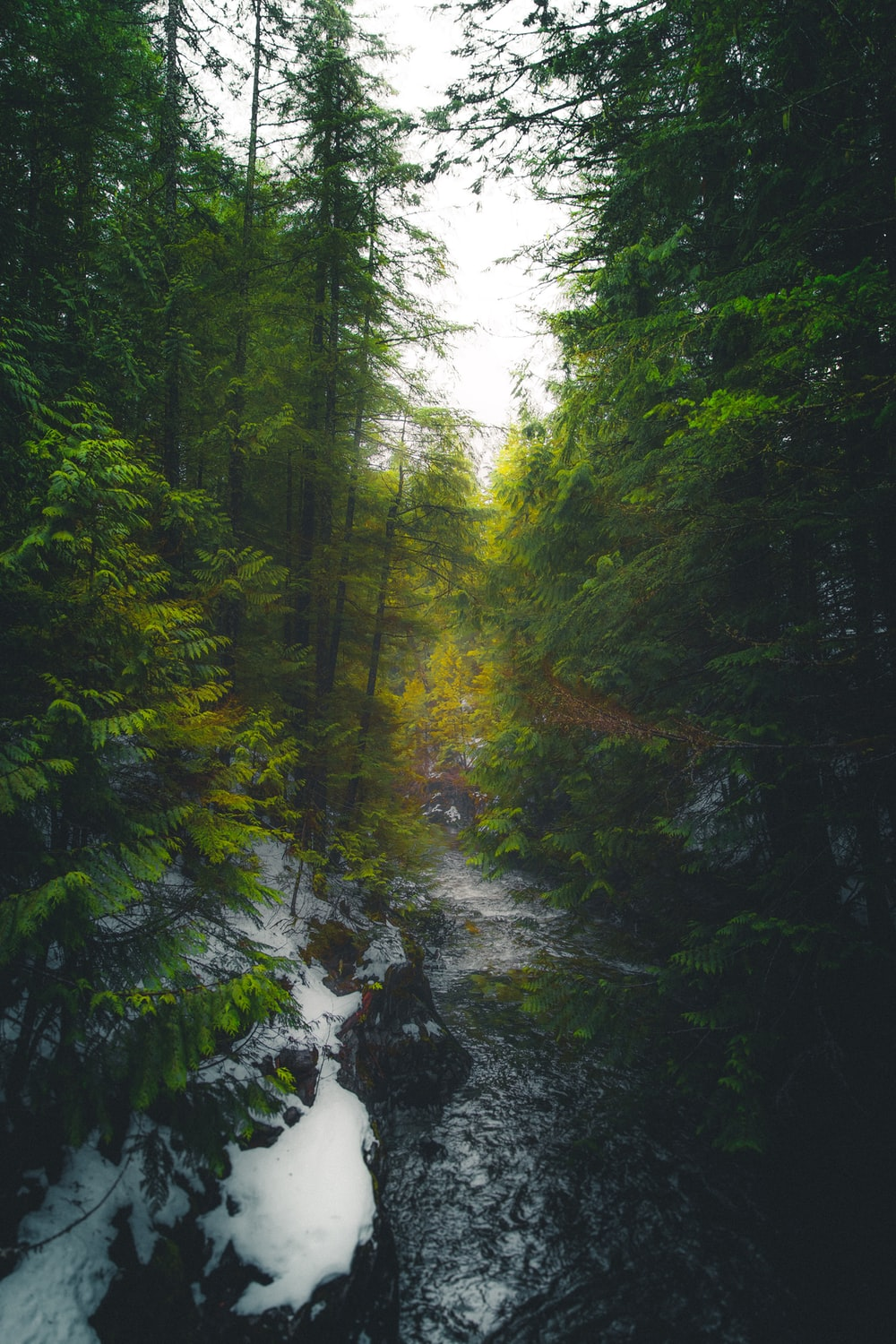 time-lapse photo of water flowing between tall trees