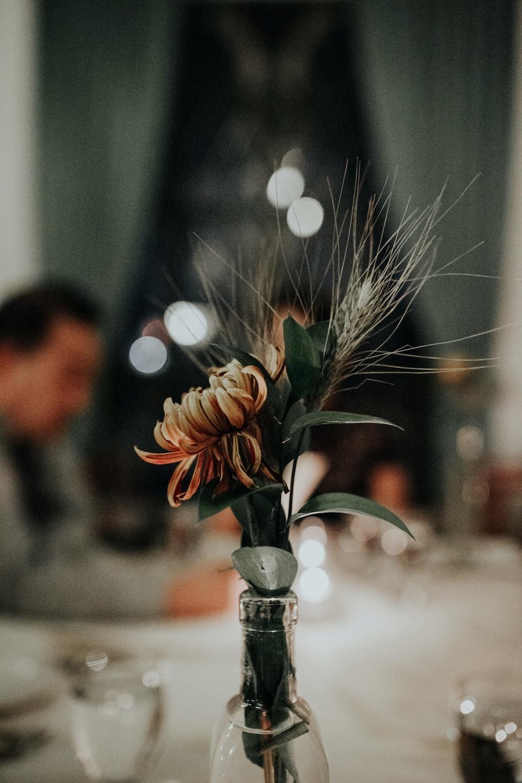 selective-focus photography of beige petaled flower centerpiece