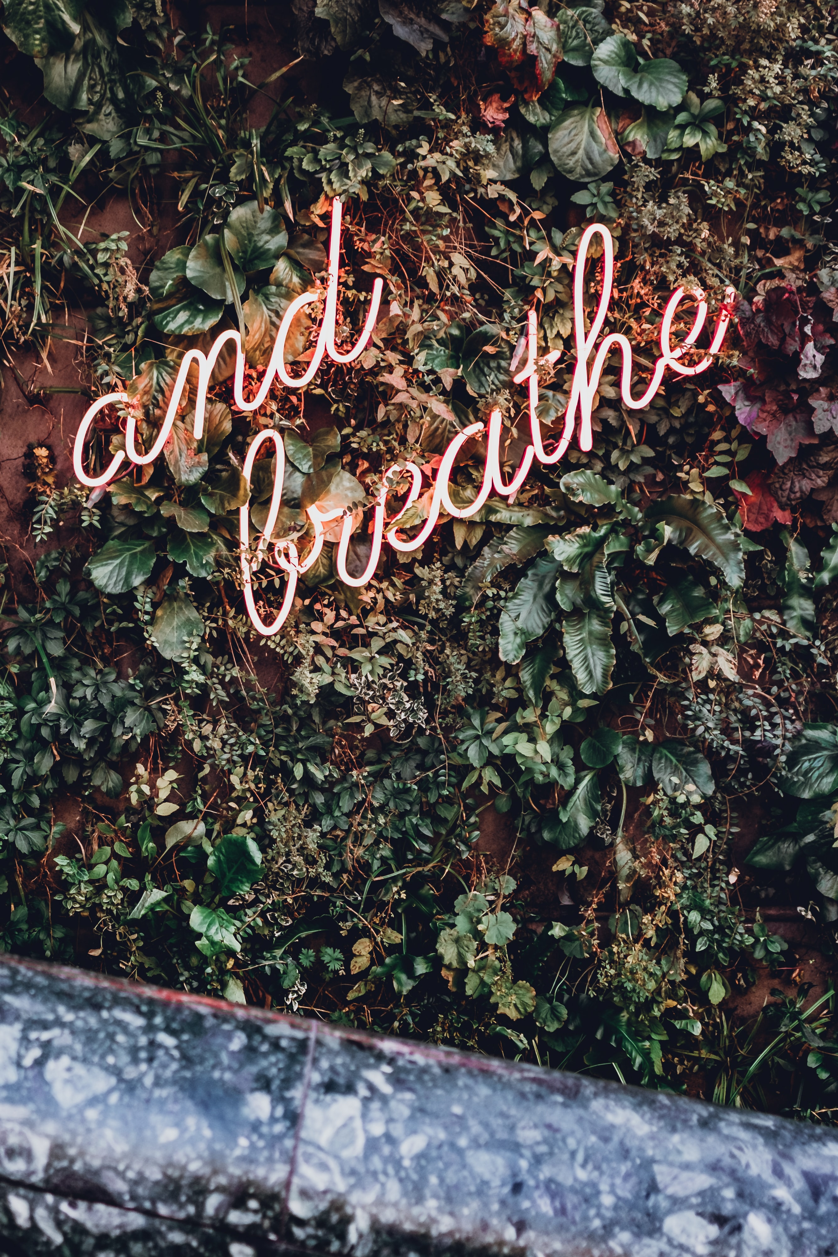 and breathe LED sign surrounded by green plants
