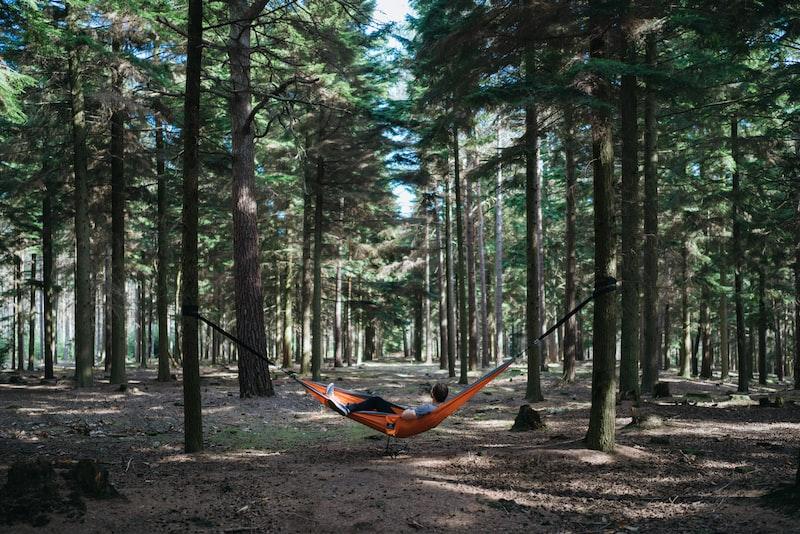 hammock in woods