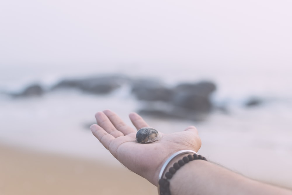 shallow focus photography of person holding seashell