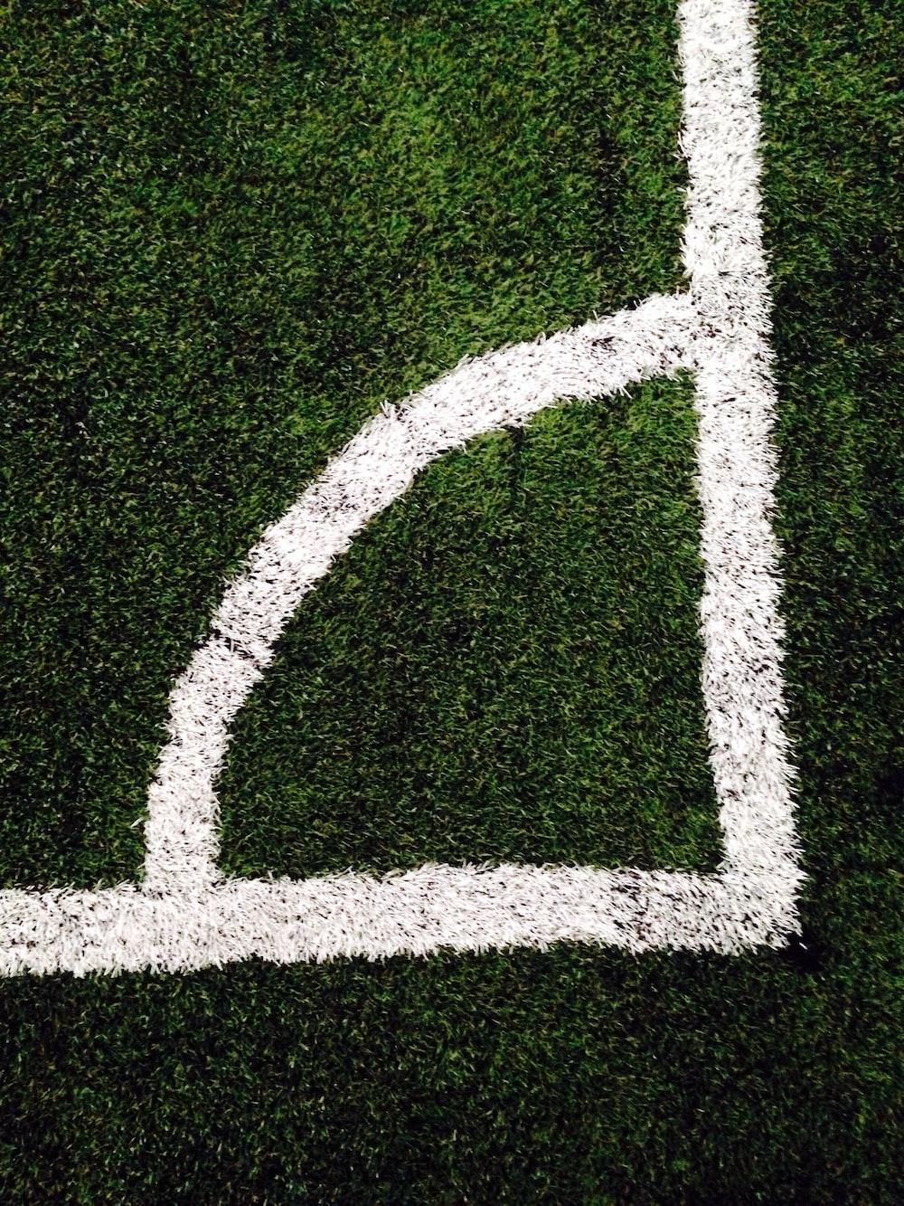 closeup photo of green grass ground