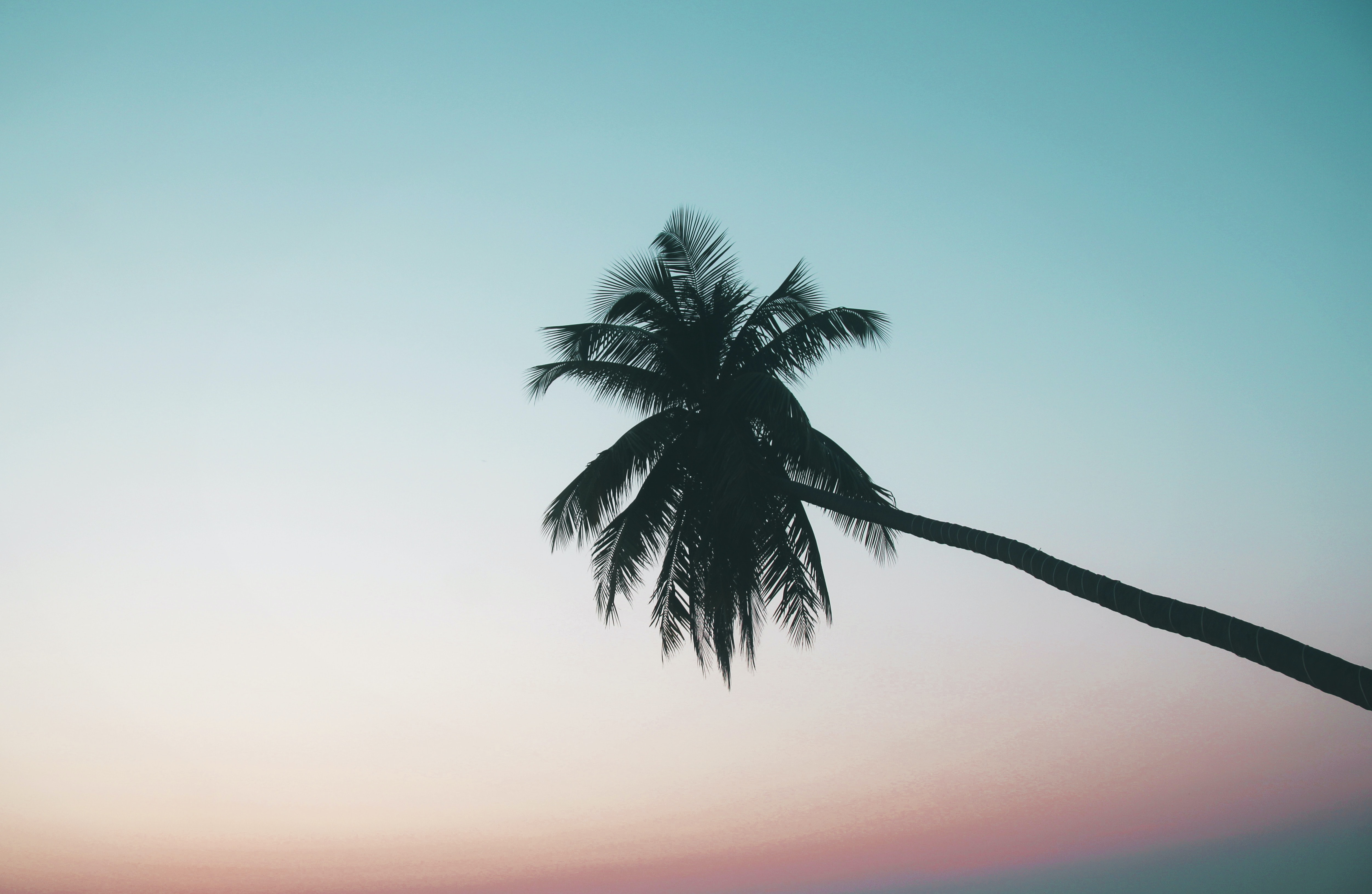 silhouette photography of coconut tree