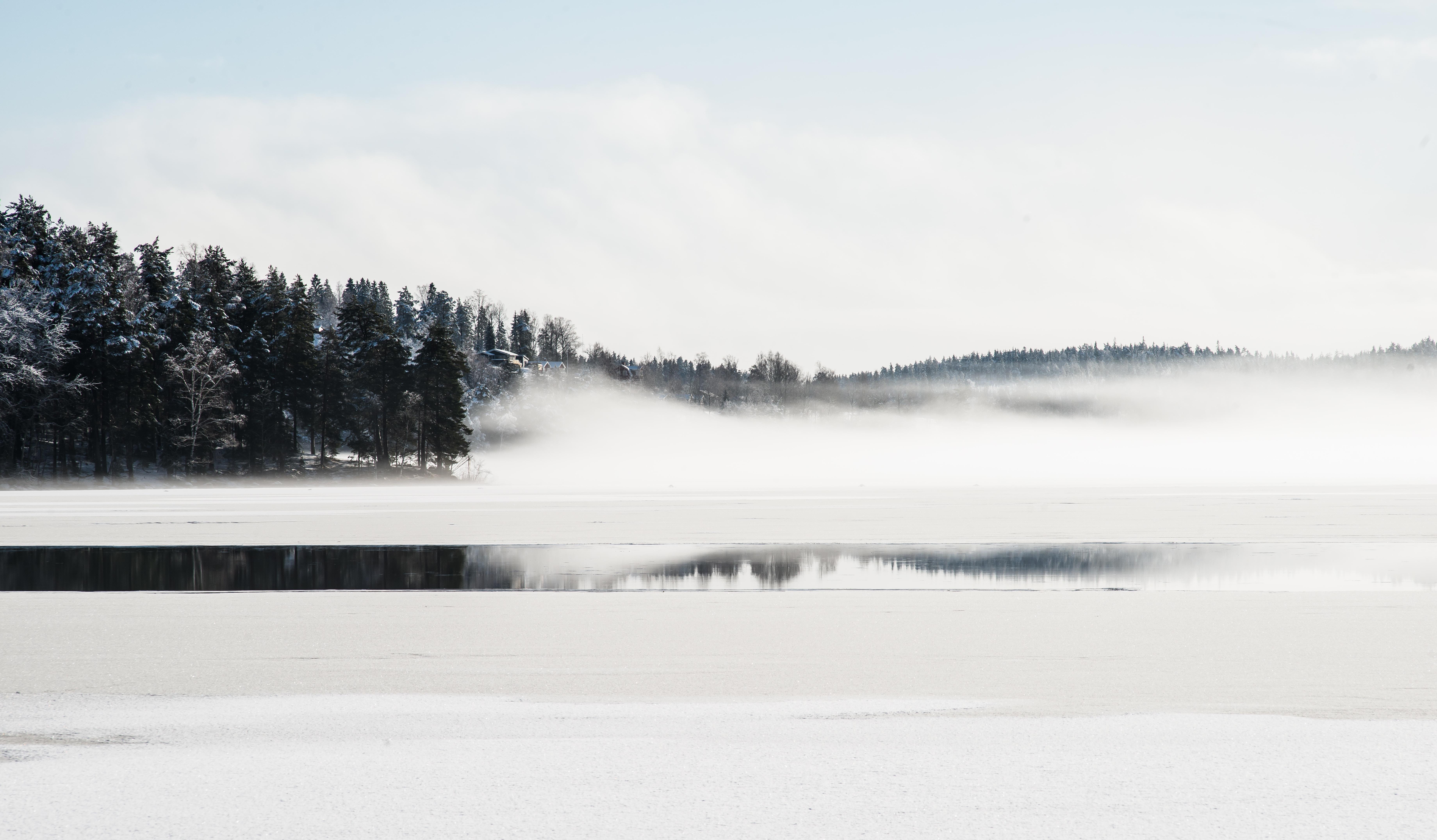 body of water near pine trees