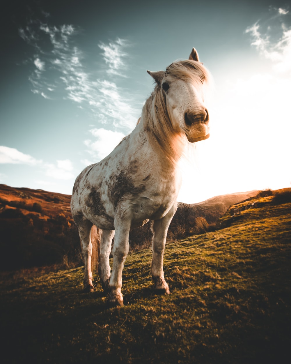 white and brown horse on brown field during daytime