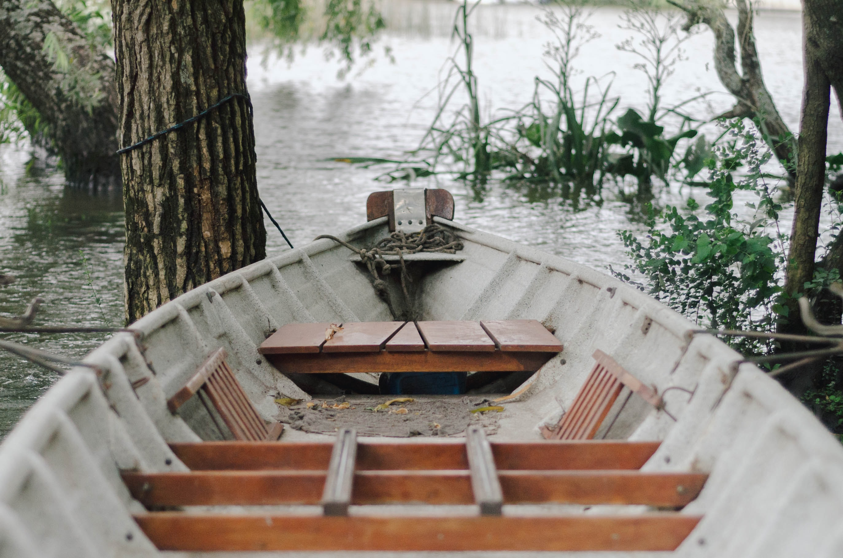 brown and white boat on lake surrounded by trees
