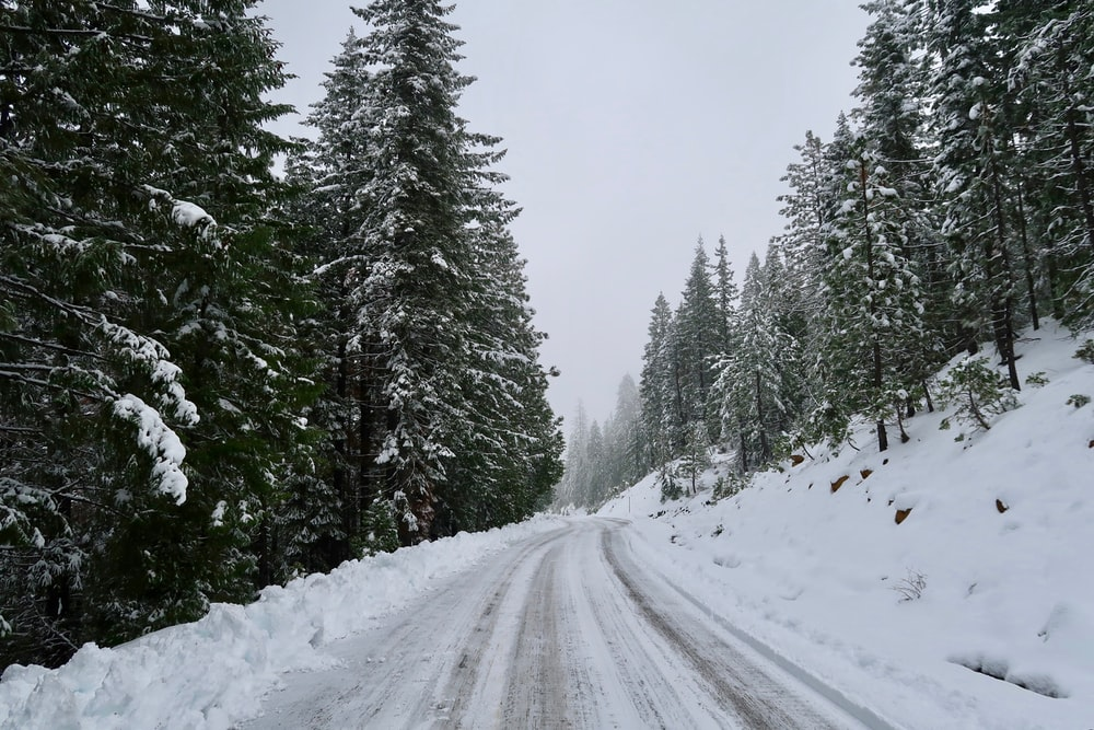 roadway coated by snow surrounded by trees