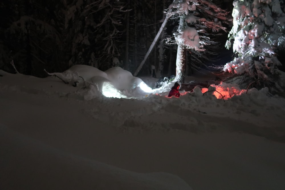 person bonfiring near tree covered by snow during nighttime