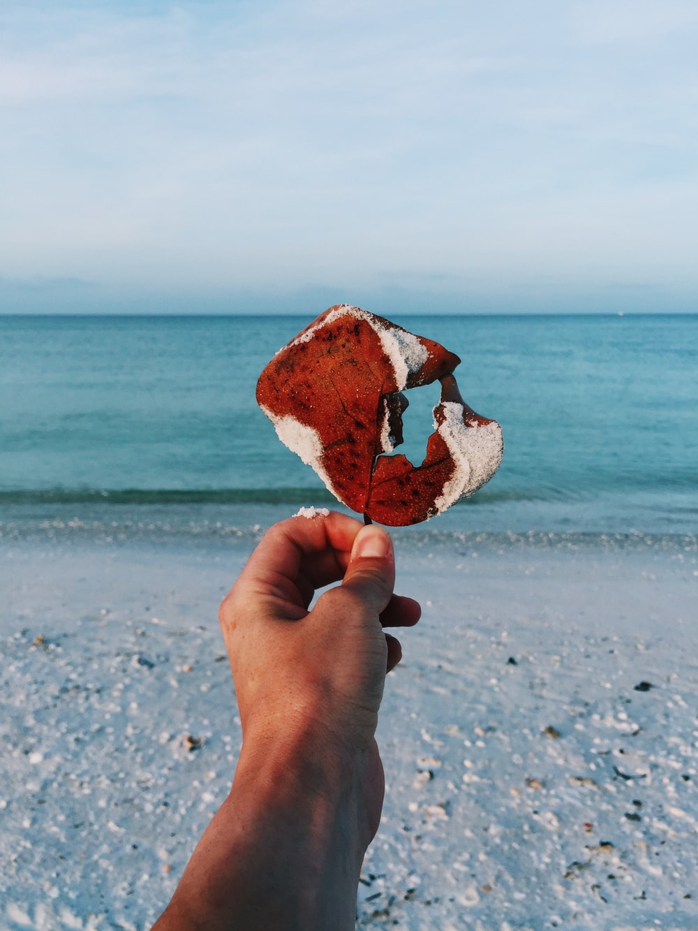 person holding brown and white leaf on seashore during daytime
