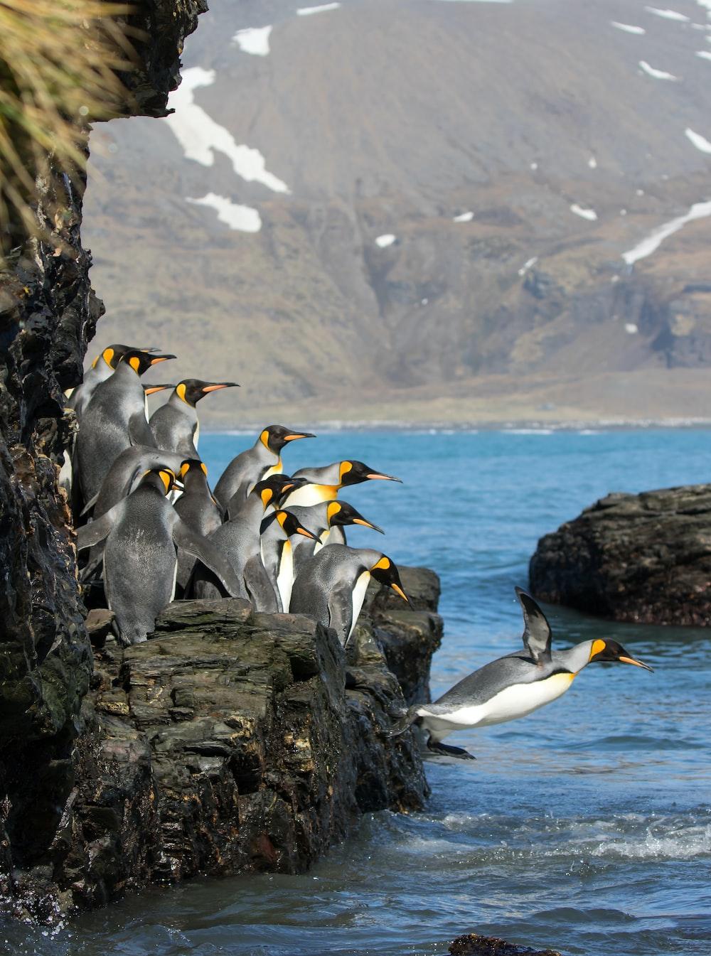 penguins standing on rock formation