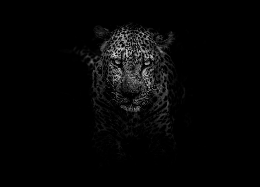 grayscale photo of leopard