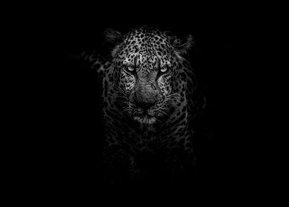 BW Jaguar