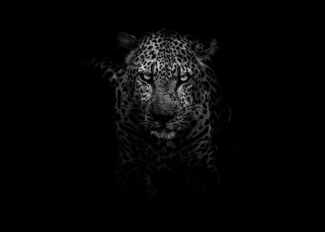 Using Spotlight as a calculator in OS X Leopard