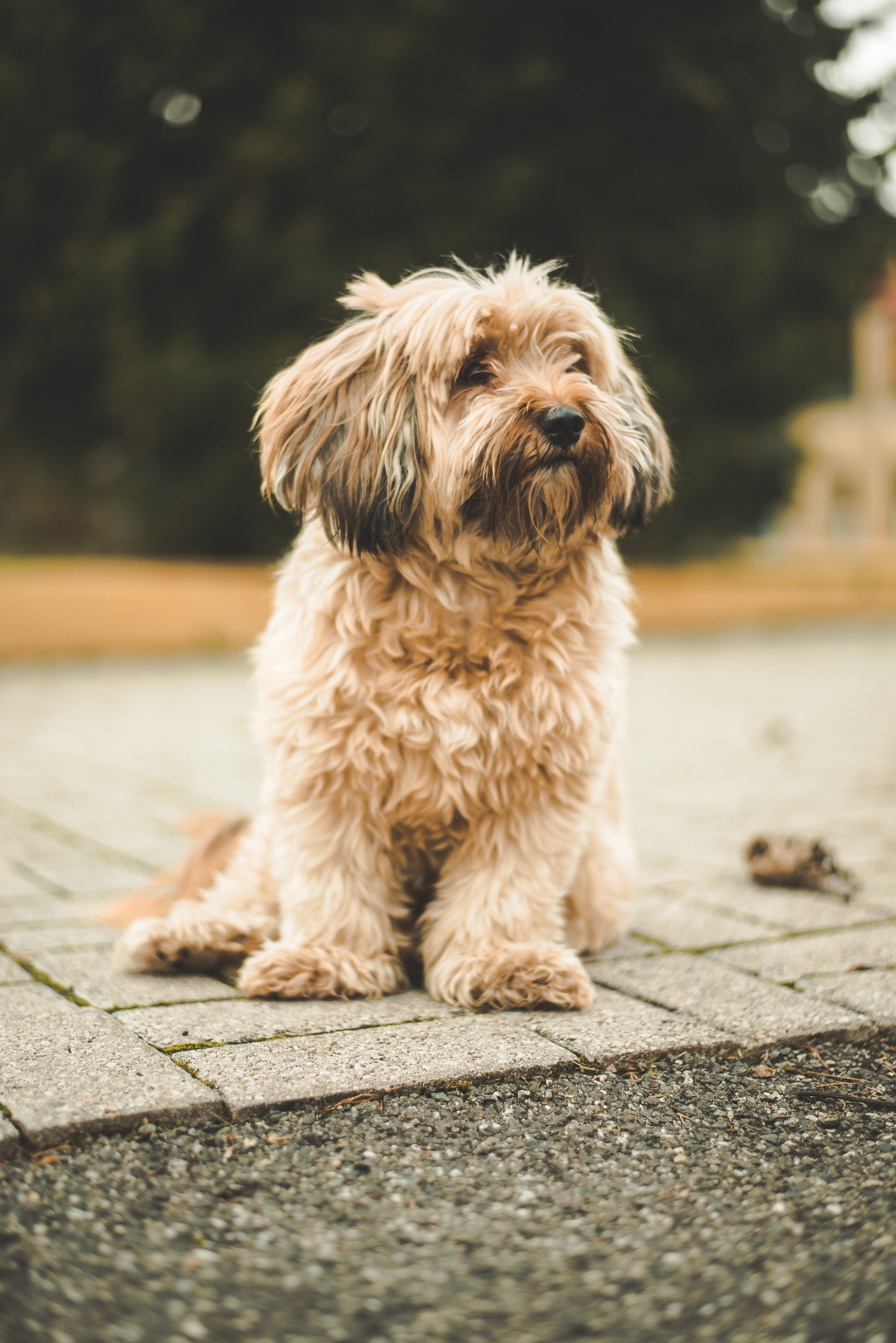 shallow focus photography of dog sitting on gray concrete flooring