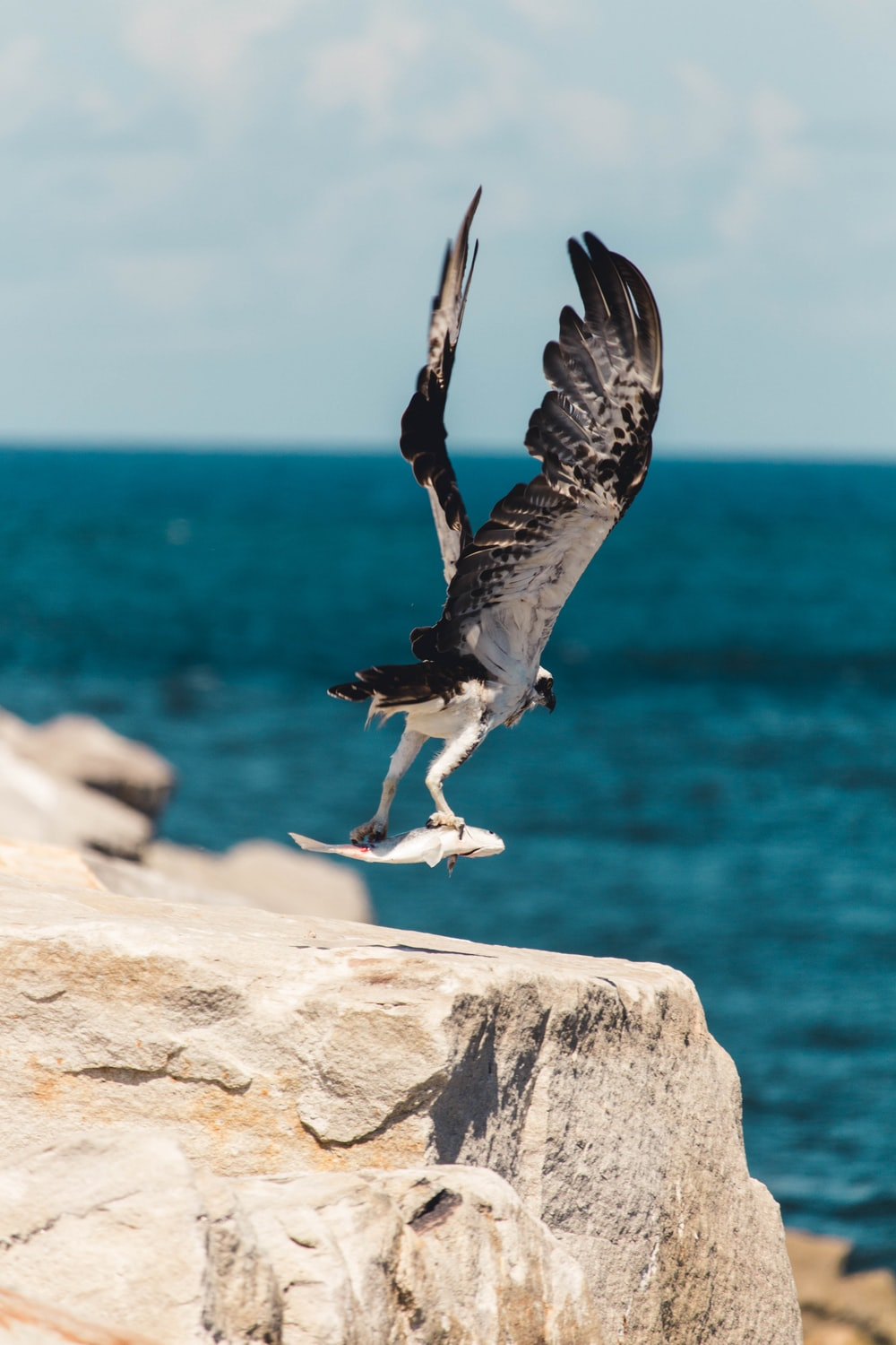 selective focus photography of fish on bird's claw