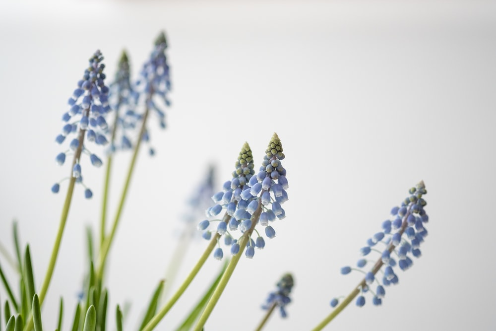 photo of blue flowers